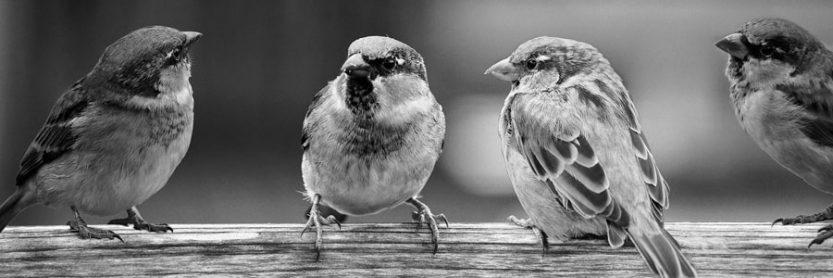 Préambule et conciliabule